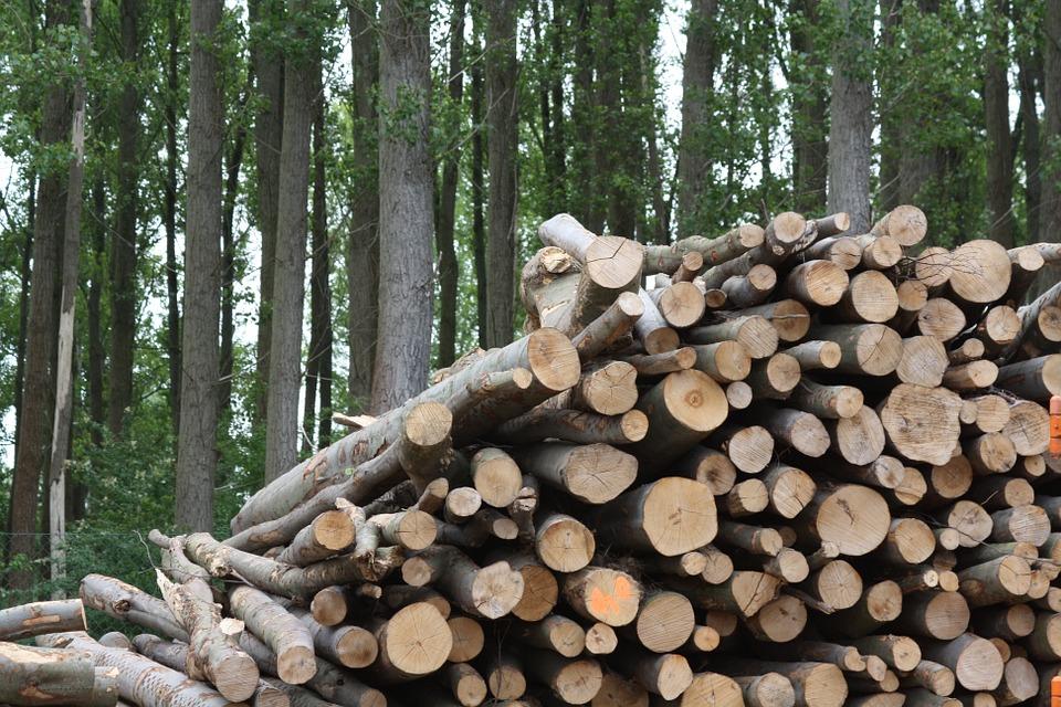 Biomassa in het algemeen