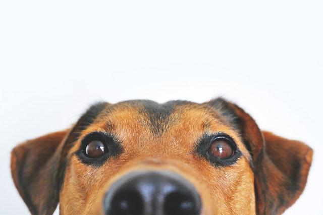 artikelplaatsen_hondenoppassers